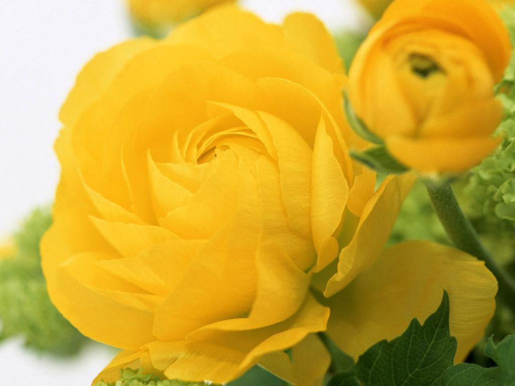 Желтые цветы картинки 2